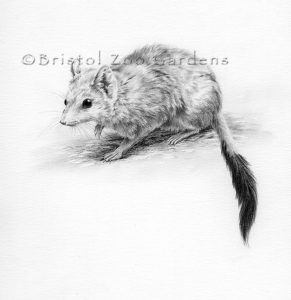 Susan Lees / Bristol Zoological Society